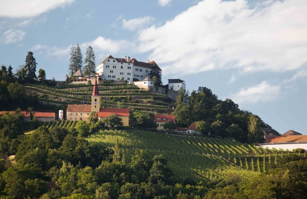 Austria vineyard 2