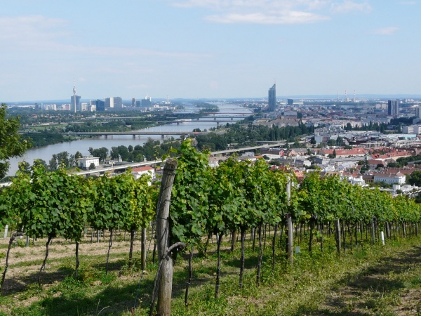Austria vineyard